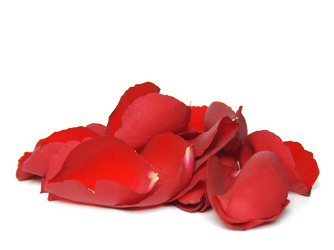 Rose Petals from Twigs Flowers and Gifs in Yerington, NV