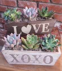 Succulent Planter from Twigs Flowers and Gifs in Yerington, NV